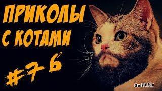 Смешные кошки и коты 2017 Приколы с котами и кошками 2017 Funny Cats Compilation