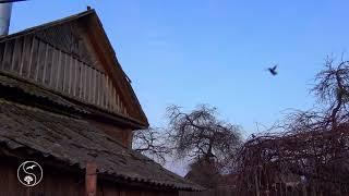 Где моя деревня, где мой дом родной. Настоящие весеннее утро в деревне. Деревня, утро, звуки деревни