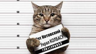 ПРИКОЛЫ С КОТАМИ 2017 РУССКИЕ КОТЫ И КОШКИ ВОРИШКИ