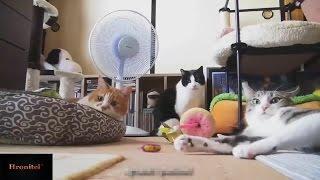 Подборка смешных приколов!Аварии и неудачи!Шутки и розыгрыши!Коты дураки!Смешное видео в HD!18+