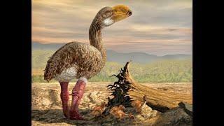 Доисторические хищники — Хищные птицы ящеры Документальные фильмы Nat Geo Wild HD