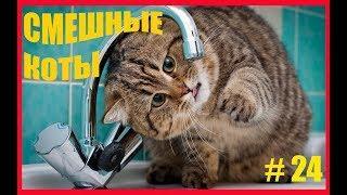 Приколы с Котами - Смешные кошки приколы про кошек и котов 2017 Лучшие приколы  юмор тест на психику