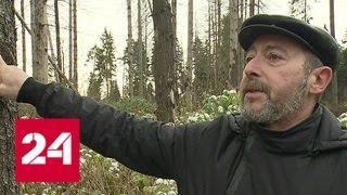 Жители Подмосковья пытаются отстоять Челюскинский лес - Россия 24
