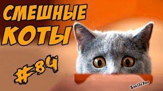 Смешные Кошки Коты Приколы ДО СЛЁЗ с Котами 2017 Funny Cats Compilation