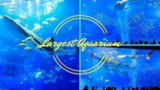 Kuroshio Sea-2nd Largest Aquarium Tank In World-With Relaxation Music, Calming Music, Romantic Music