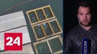 """Обитателей """"китовой тюрьмы"""" переместят в специальный Центр - Россия 24"""