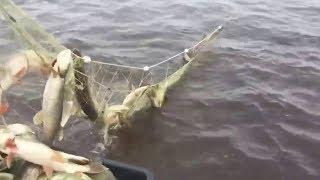 Необычные случаи на рыбалке! Ловля на сеть браконьерами! Видео Приколы #7