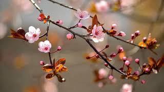 Мелодия весны! Красивая жизнерадостная инструментальная музыка! Весеннее настроение