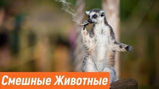 Приколы с животными / Смешные животные / Новые приколы 2020 / Эти милые животные