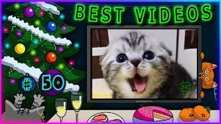 Лучшие видео недели | Best videos of the week | №50 от SUPERKAKTYS