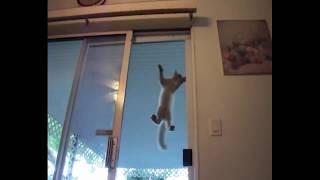 Реально очень умный кот эффектно открывает закрытые двери – Смешные кошки