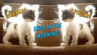 GOOD MORNING! Wake up! GOOD MOOD! FUNNY VIDEO | ДОБРОЕ УТРО! ХОРОШЕГО НАСТРОЕНИЯ! ОБХОХОЧЕШЬСЯ