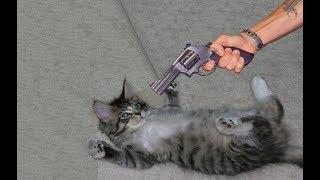 Смешные кошки приколы про кошек и котов НОВЫЙ ТОП 2018 (Видео приколы - Funny cats)