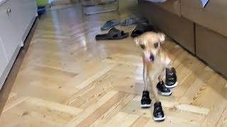 Смешные животные Funny Dogs & Cats Compilation 2017 Смешные собаки и умные кошки Приколы про собак