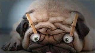 Приколы про животных и людей самые смешные: смешно до слез [#1]