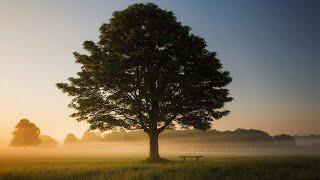 Спокойная Музыка Для Снятия Стресса - RELAXING PIANO - Music - Белый Шум / Stress Relief Music #1