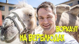 Новости сегодня: Воркаут на верблюдах | Факты: Как становятся артистами цирка?