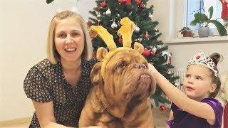 Новогодние приколы с животными 2018 FUNNY ANIMALS COMPILATION 面白い犬と猫 lustige Tiere