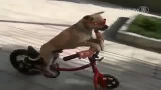 Смешное видео | Приколы про людей и животных