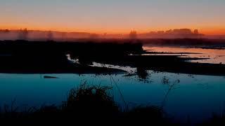 Звуки природы, рассвет на озере, пение птиц, музыка для сна