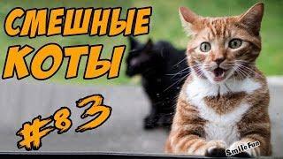 Смешные Приколы с Котами и Кошками 2017 Видео Коты Funny Cats Compilation