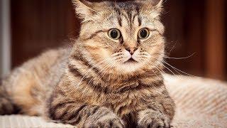 Смешные Коты и Кошки 2017 ТОПовая Подборка. Лучшие Приколы с котами. Funny Cats 2017 #1