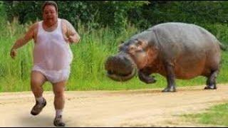 Funny Video Animals People and Jokes, Fails, Funny / Приколы Видео Животные Люди и Анекдоты, Неудачи