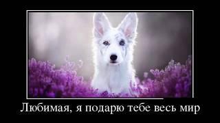 323 Весёлые картинки   Демотиваторы