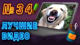 Лучшие видео недели | Best videos of the week | №34 от SUPERKAKTYS