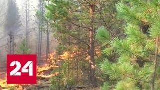 В Приморье продолжают свирепствовать пожары - Россия 24