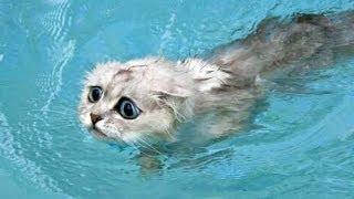 МЕЛОДИЯ ВОДЫ!!! ОЧЕНЬ КРАСИВАЯ МУЗЫКА!!! CEPHEI MC - Water energy!