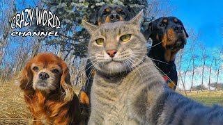 СМЕШНЫЕ КОТЫ И КОШКИ 2017 ПРИКОЛЫ С КОТАМИ И КОШКАМИ 2017 FUNNY CATS Compilation 2017 #45