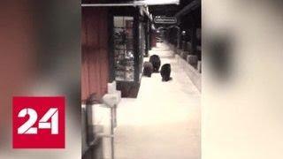Торговый центр Калифорнии посетили медведи. Видео - Россия 24