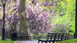 relaxdaily N°009 – фоновая музыка лаунж, легкая для восприятия – фото Манхэттена