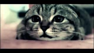 Клип запрещён к показу на TV! ХИТ 2015, Новые клипы, Русские клипы, Красивые девушки, Котята