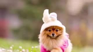 Милые щеночки для поднять вам настроение