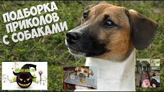 Лучшие видео приколы с животными! Приколы про СОБАК. Самые милые животные!!!