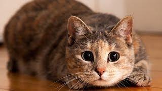 Угар Смешные коты 2017  funny cats приколы с котами и кошками котики приколы смешные видео про котов